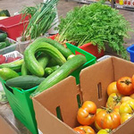 Community Garden Grows 853 Kilograms of Produce for Port Cares Food Bank!
