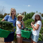 Lockview Park Community Garden Wraps up Second Growing Season!